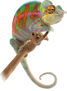 Planning & Strategy Colorful Chameleon