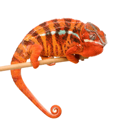 Orange Chameleon - Project Execution
